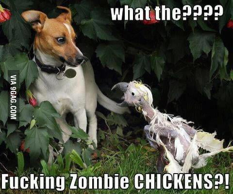 Scary Chicken is Scary