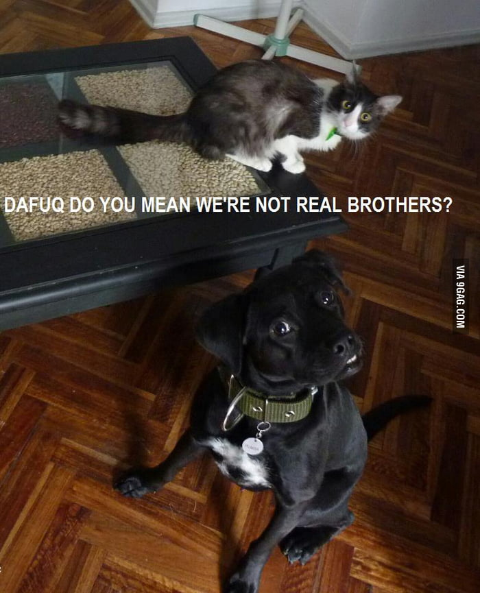 Adopted??