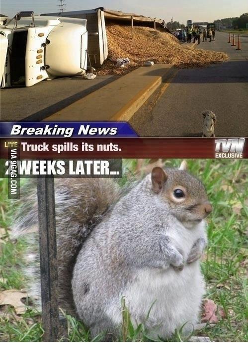 Truck spills its nuts