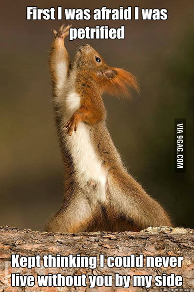 Dramatic Squirrel is dramatic