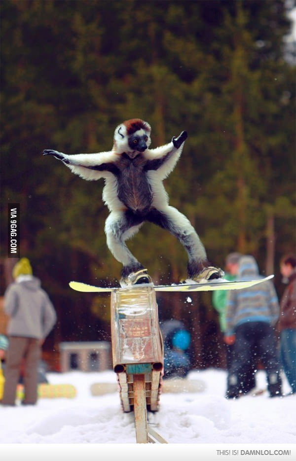 World's First Snowboarding Monkey