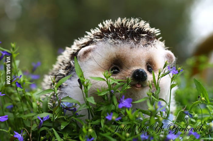 Baby hedgehog in the grass