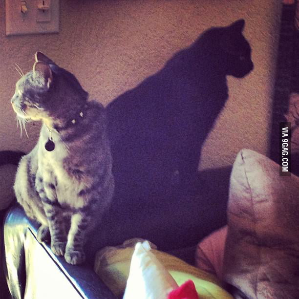 Is that a shadow, or a cat? You be the judge.