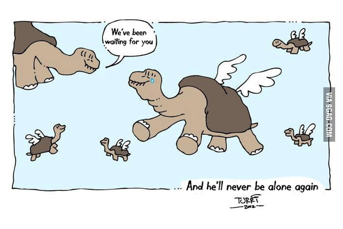 Lonesome George, never again
