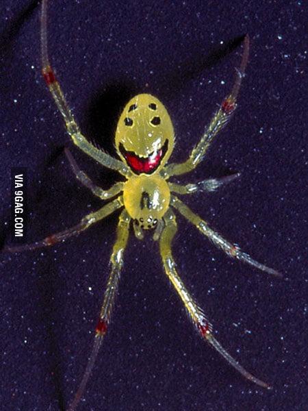 Happy spider is happy