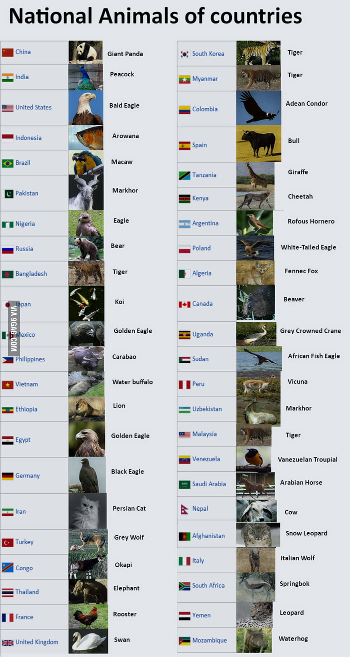 National Animals Of Countries 9gag
