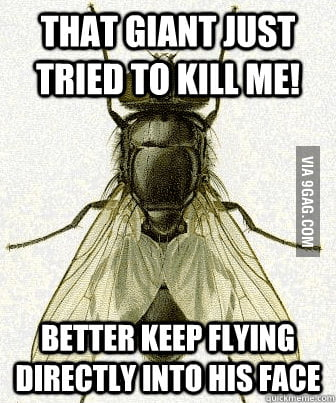 More fly logic