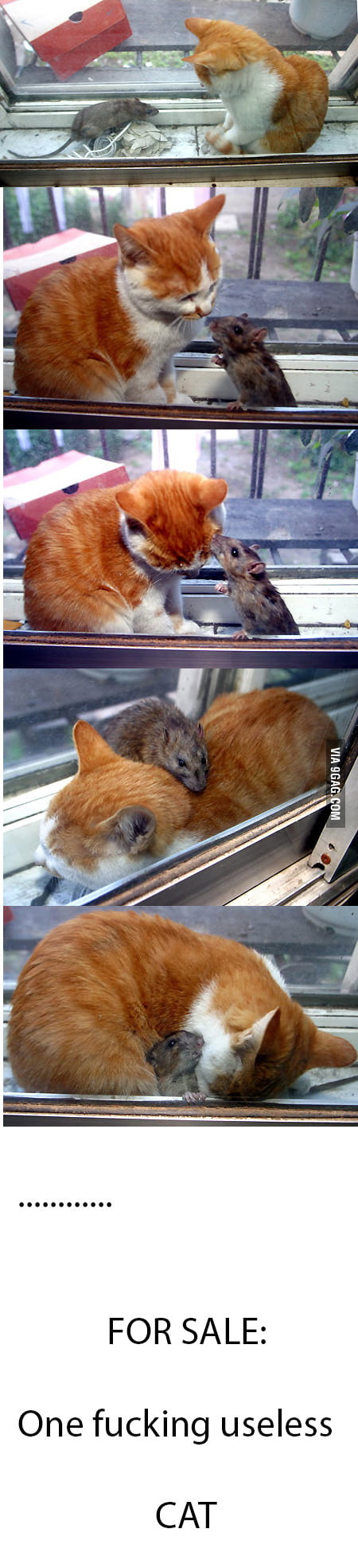 Real life Tom & Jerry. Sort of