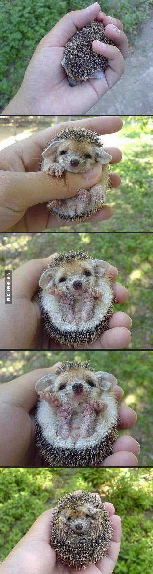 A baby hedgehog