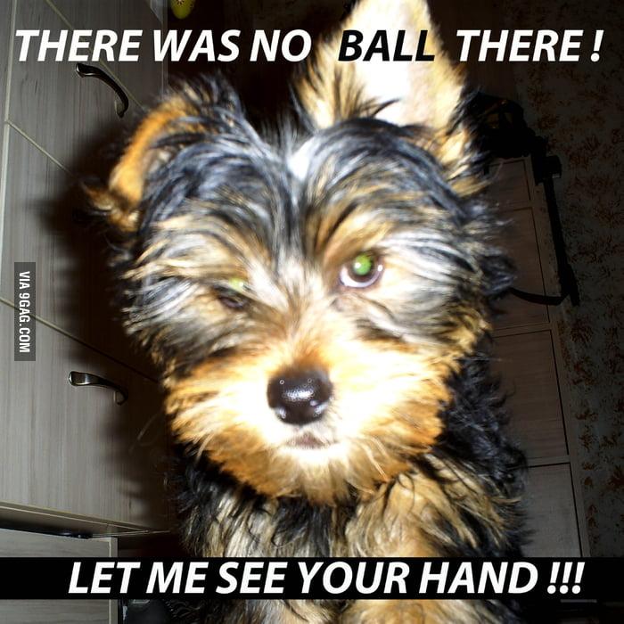 Suspicious puppy is suspicious