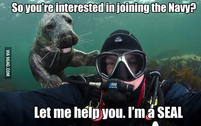 Swimming Instructor Seal