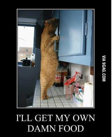 Hungry Cat is Damn Hungry