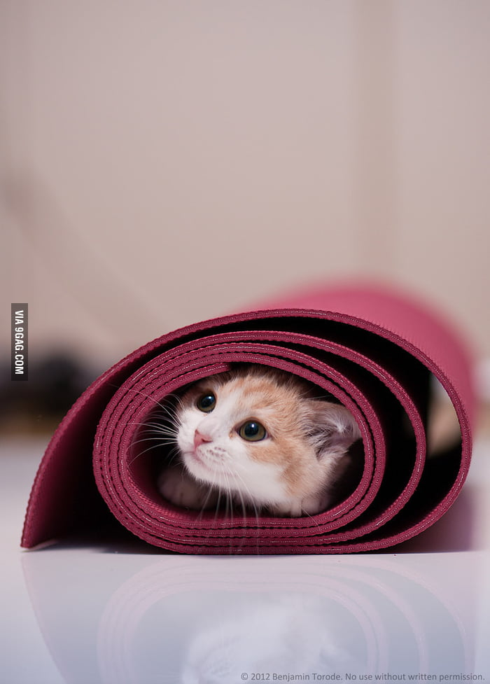 My cat loves my yoga mat...