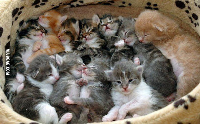 BASKET-O-KITTENS