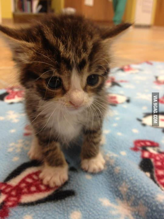 Will you adopt me?