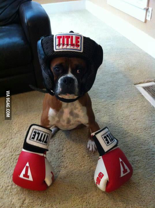 The King of Boxer