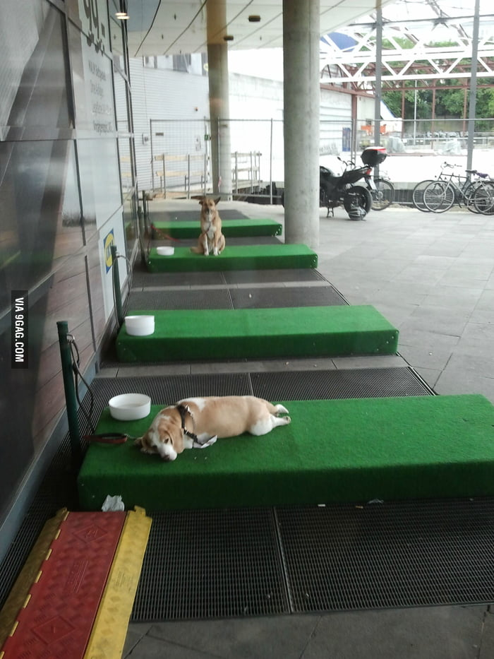 Dog parking in front of IKEA