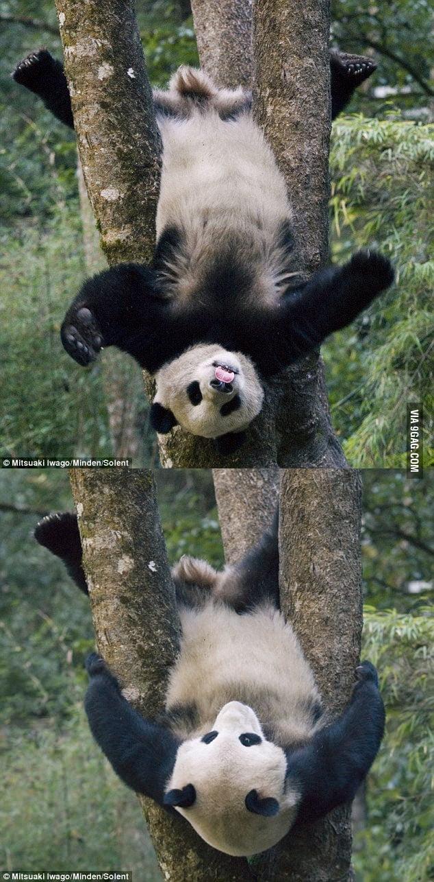 Kung Fu Panda?