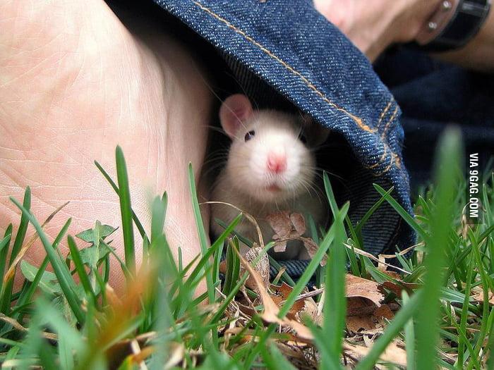 Peekaboo, I see you
