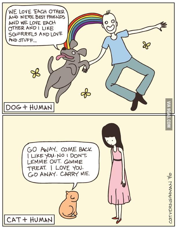 Silly Dog vs Lazy Cat