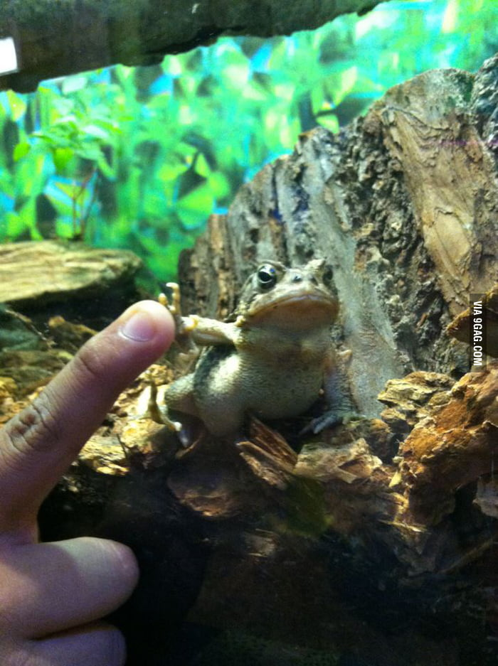 Gangsta frog didn't give a f**k, but still highfived me