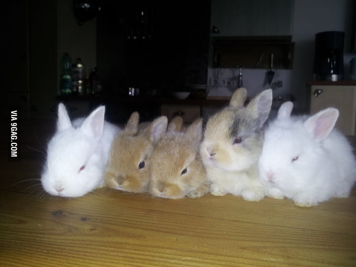 Just cute rabbits