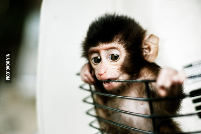 Cute baby monkey in basket!