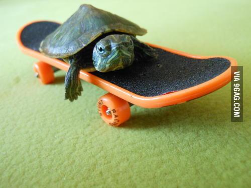 Skateboarding Turtle! ...