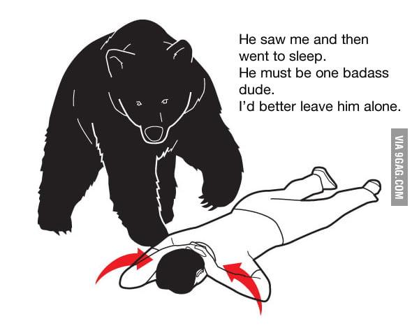 Bear Logic