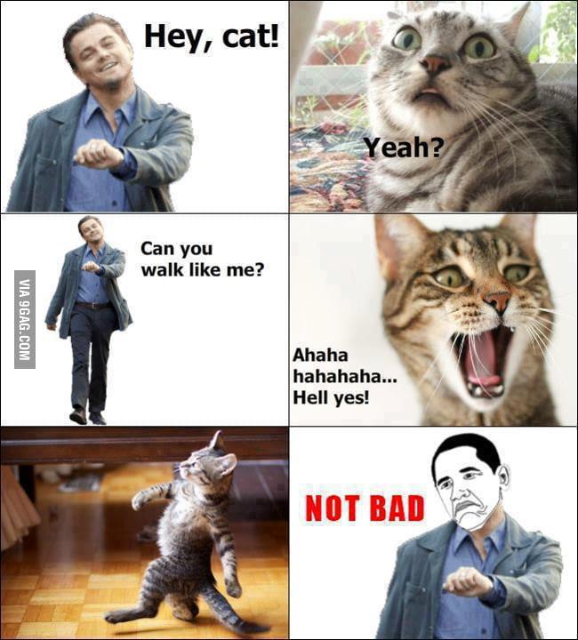 Like a Sir Cat