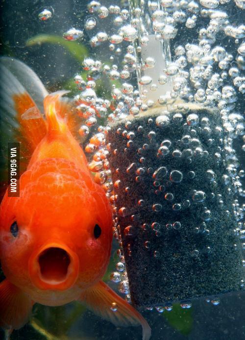 OMG Bubbles