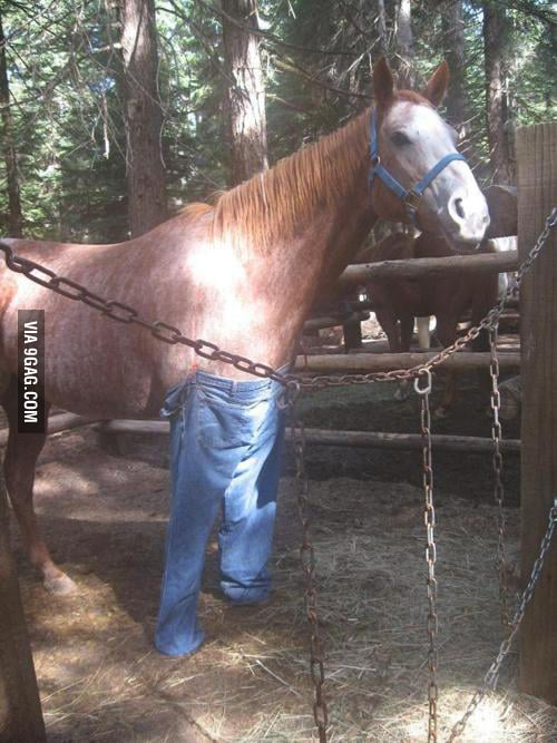 A horse with pants