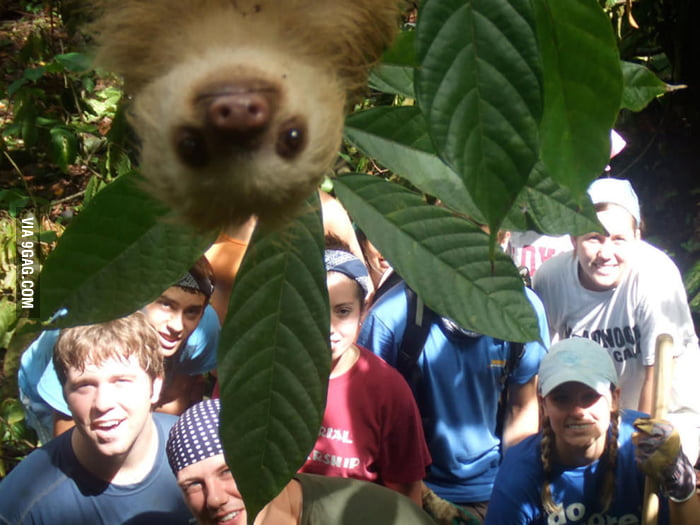 Photobombed lvl: Sloth