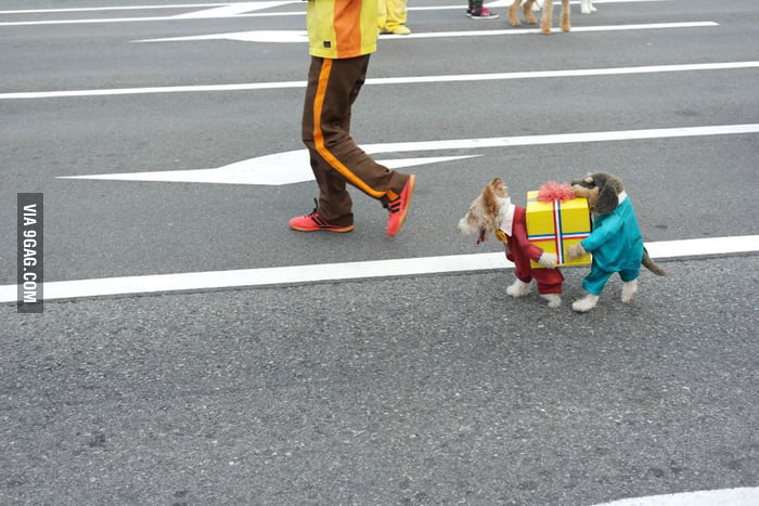 Epic dog costume is epic