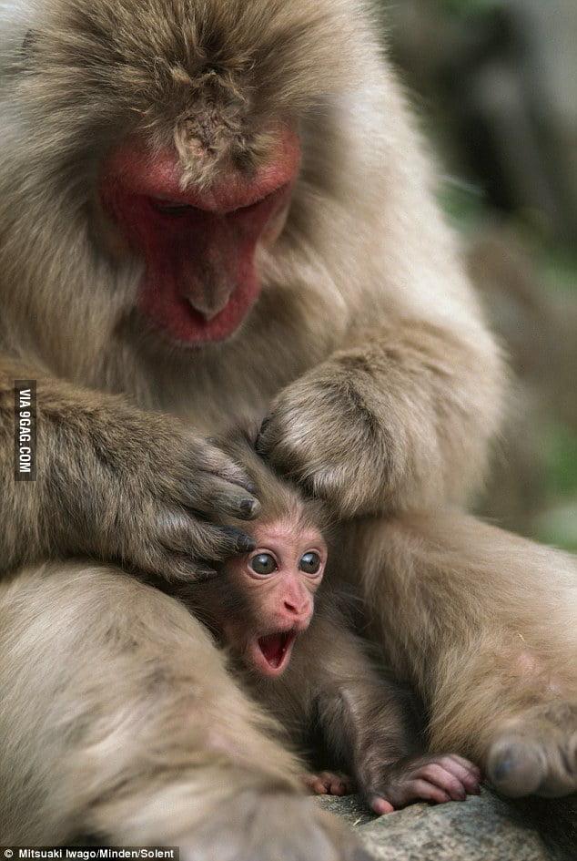 Mom! Mom!Mooooooooooom!