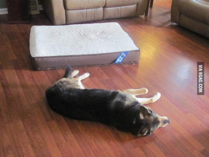 Just bought my dog a $100 orthopedic dog bed but...