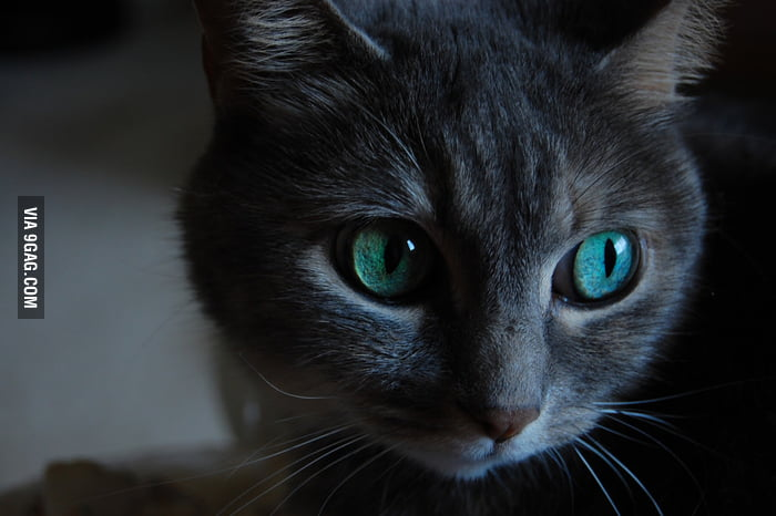 The mesmerizing eyes of a feline