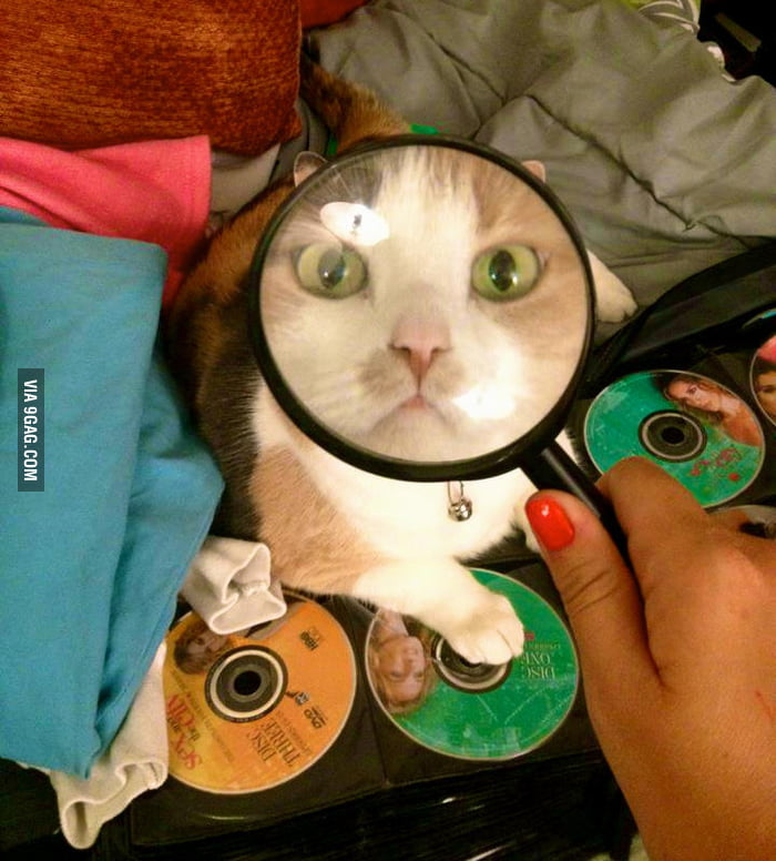 Cat Detective is on the case of Missing DVD