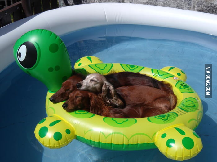 Just Three Weiners In A Floaty On A Hot Summer Day
