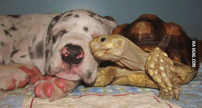 Friends come in all shapes and sizes