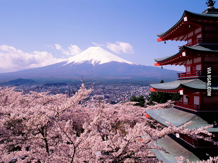 The 2 best things in Japan: Cherry Blossoms and Fuji