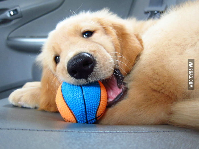 He really loves the ball!