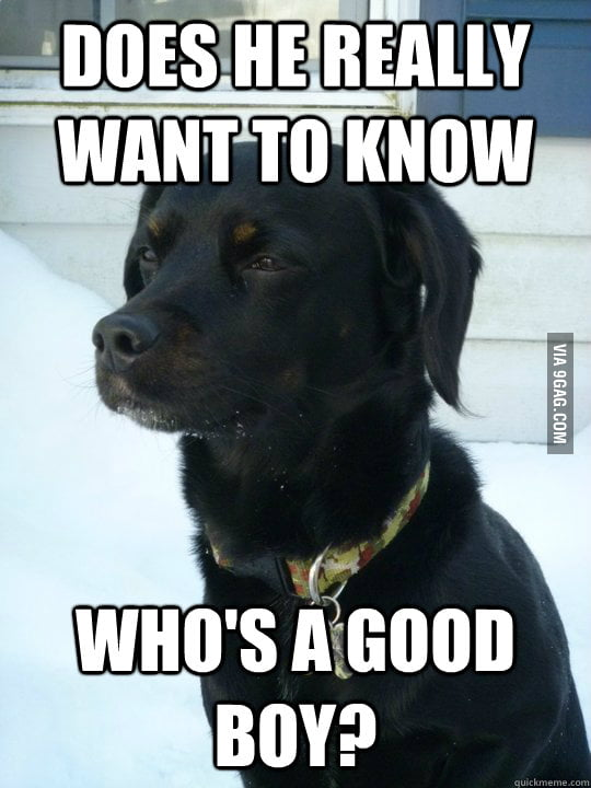 Philosophical Puppy ponders the most faq in his life
