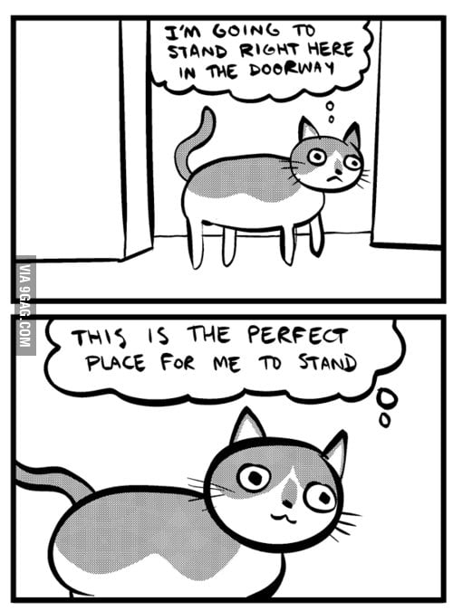 My cat when I wake up for work at 5am...