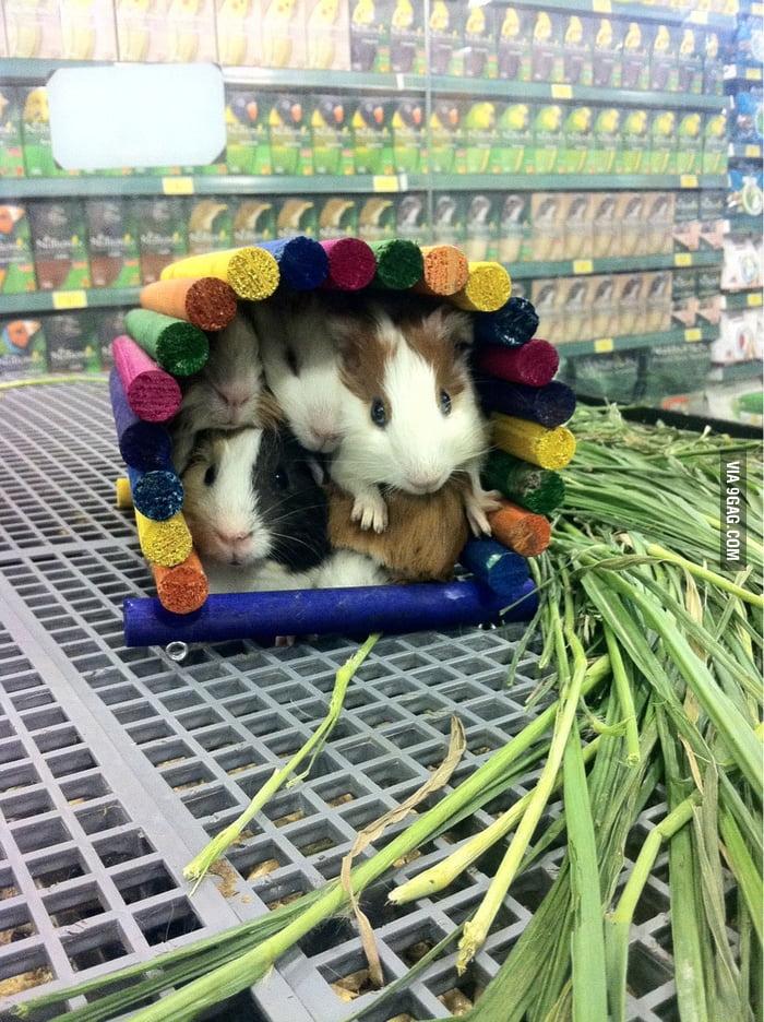 Overcrowded Cuteness