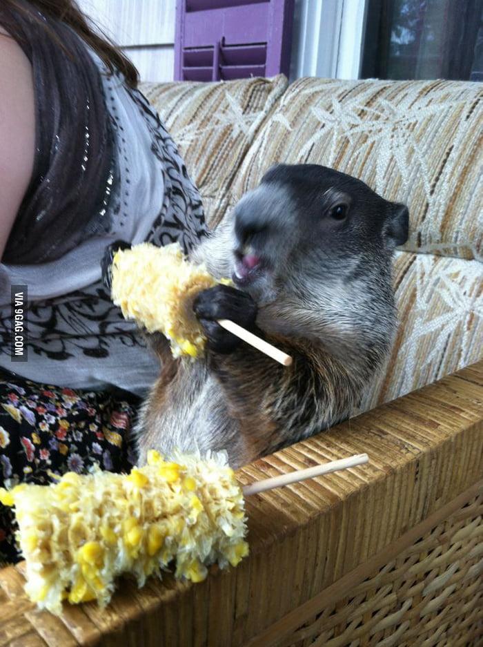 He's definitely enjoy his corns.
