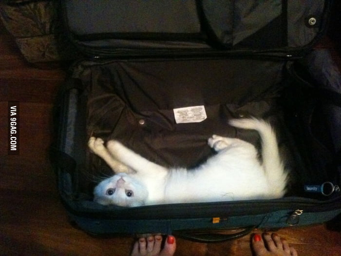 See who's there in the luggage...