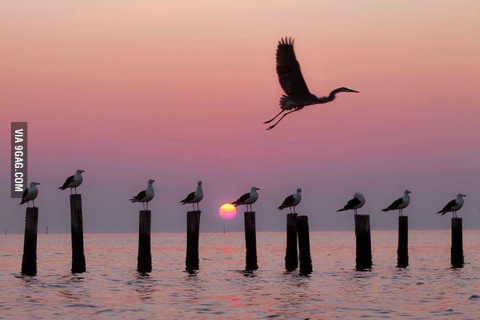 Seagulls, sunset, fly away.