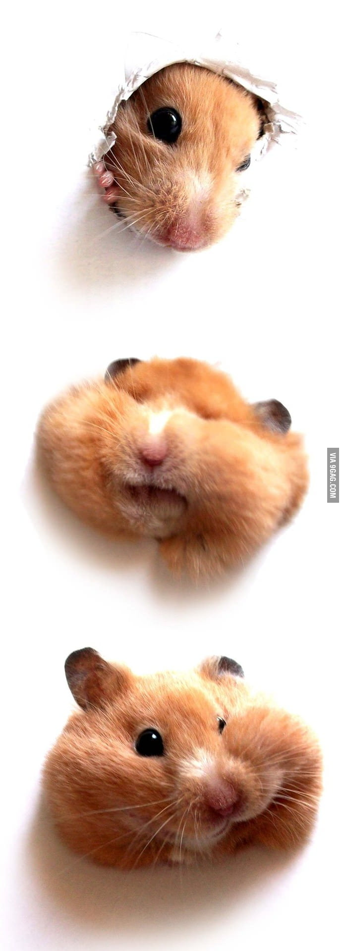 I love hamster!