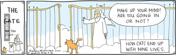 How cats get their 9 lives...